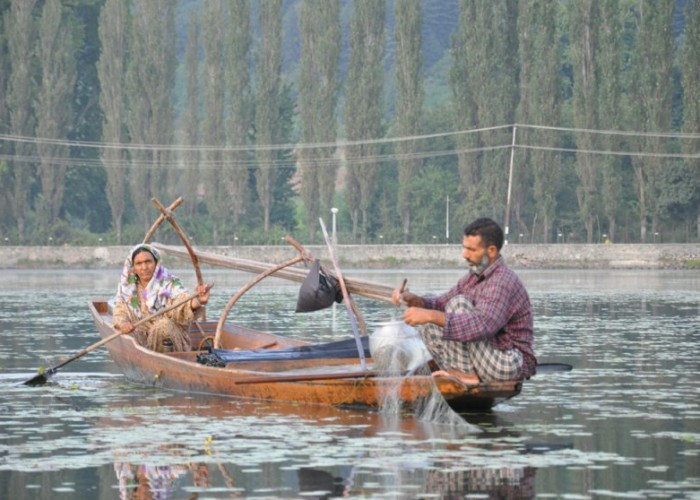 Fisherman on Dal Lake, Srinagar