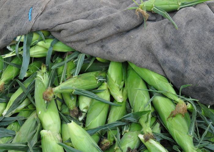 Corn Santa Fe Farmers Market