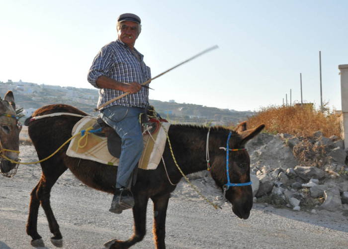 Bringing the Donkeys Home, Santorini