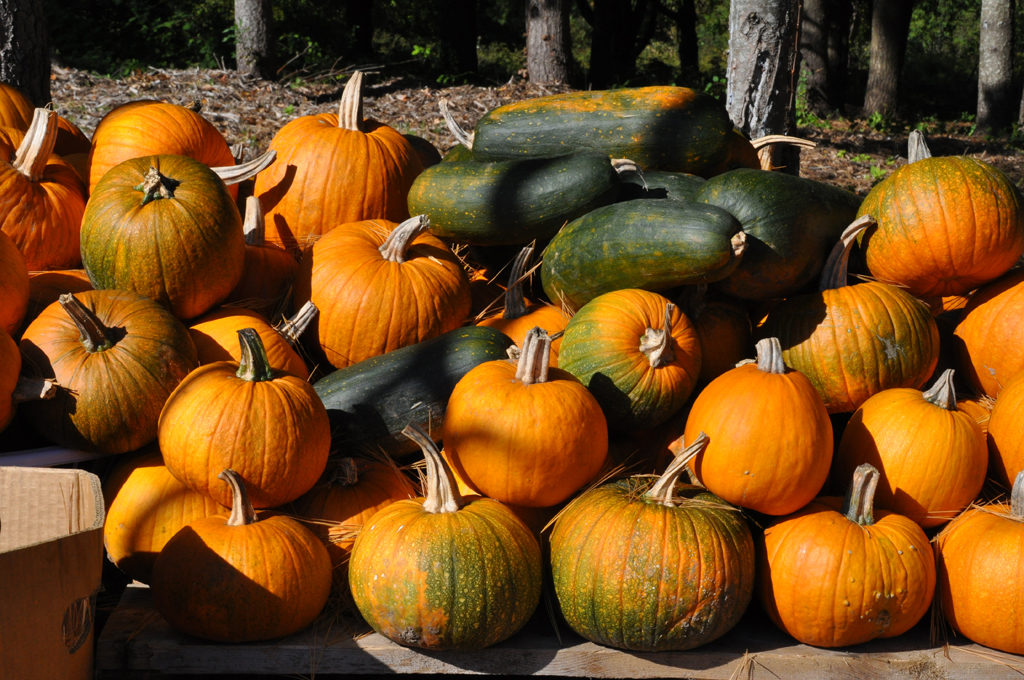 Pumpkins and Squashes at Forest City Farm