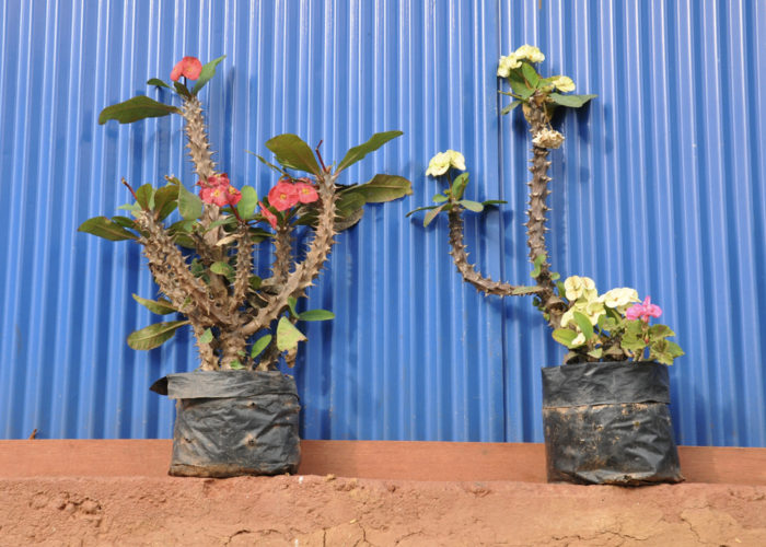 Plants, Darjeeling